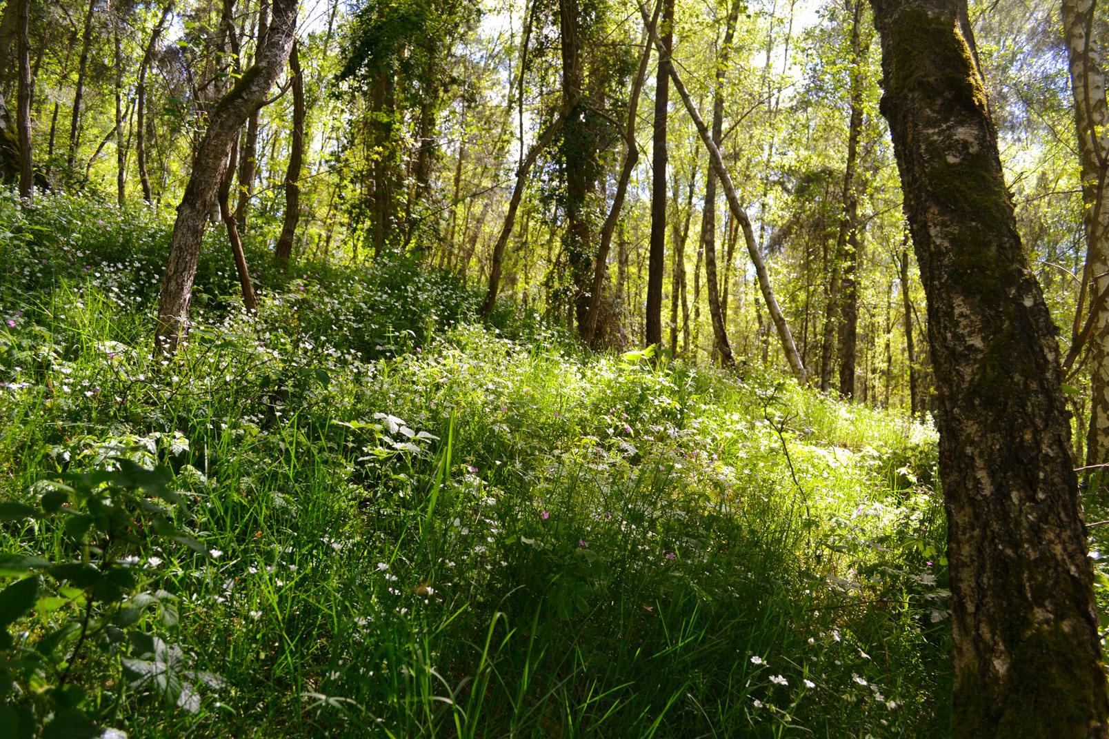 Waldlicht1a